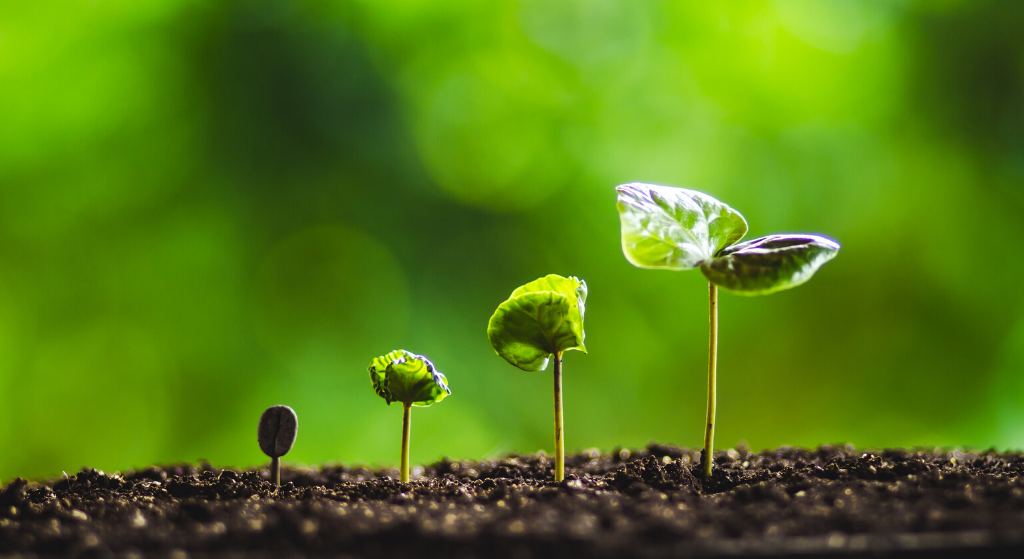 various stages of growth of a seed to a seedling in earth with green background
